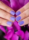 Uñas cuidadas delante de flores de color púrpura — Foto de Stock