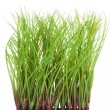 New Green Grass — Stock Photo