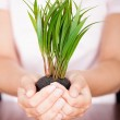 Hand Holding Coin With Plant — Stock Photo