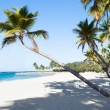 Palm Trees At Peaceful Beach — Stock Photo