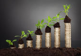 Saplings On Stack Of Coins Representing Growth — Stock Photo