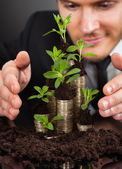 Businessman Protecting Coins In Saplings — Stock Photo