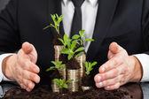 Uomo d'affari con monete e alberelli — Foto Stock