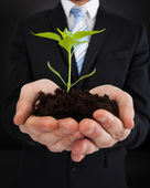 Businessman Holding Sapling Representing Growth — Stock Photo