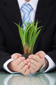 Businessman Holding Saplings — Stock Photo