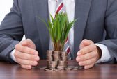 Businessman Protecting Saplings — Stockfoto