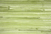 Wallpaper grass cloth texture — Stock Photo