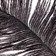 Stock Photo: Black feather plumage texture