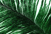 Feather plumage green texture — Stock Photo