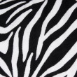 Zebra fabric texture background — Stock Photo