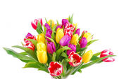 Tulip bouquet isolated on white — Stock Photo
