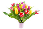 Bouquet of tulip flowers isolated on white — ストック写真