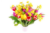 Bouquet of tulip and daffodils flowers — Photo