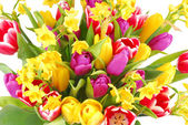 Bouquet of tulip and daffodils flowers — Stock Photo