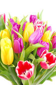 Bouquet of tulip flowers — Stock Photo