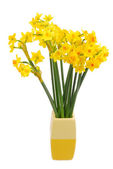 Bouquet of daffodils flower — Foto Stock