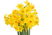 Bouquet of daffodils flower — Stock fotografie