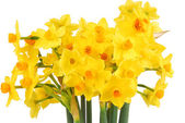 Bouquet of daffodils flower — Stock Photo
