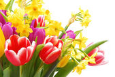 Bouquet of tulip and daffodils flower — Foto Stock