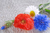 Poppy flowers  and cornflower on linen cloth — 图库照片