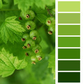 Unripe currant color chart palette swatches — Stock Photo