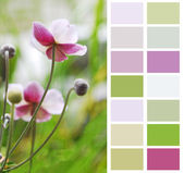Anemone Japanese in pastel color chart palette swatches — Stock Photo
