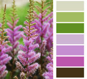 Flower pink color chart palette swatches — Stock Photo