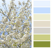 Flowering color chart palette swatches — Stock Photo