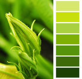 Courgette green color chart palette swatches — Stock Photo