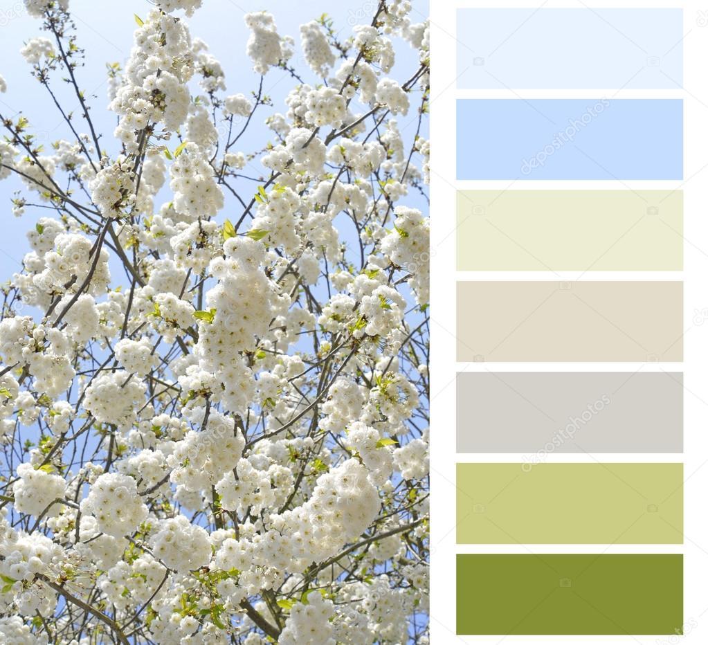꽃 색 차트 색상표 견본 — 스톡 사진 © severija #51542317