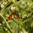 Corlorful Butterfly in red, white and black — Stock Photo #13638907
