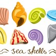 Royalty-Free Stock Vector Image: Set of colorful sea shells