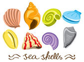 Set of colorful sea shells — Stock Vector