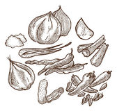 Set of herbs and spices doodle — Stockvektor