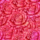 无缝背景,鲜花玫瑰 — 图库照片