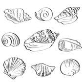 Set seashells, outline — Stock Vector