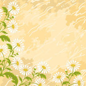 Background chamomile flowers — Stock Vector