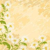 Flores de manzanilla de fondo — Vector de stock