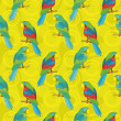 Seamless background, parrots — Stockfoto