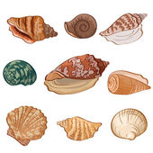 Set seashells. — Stock Photo