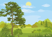 Summer landscape with trees and sky — Stock Vector