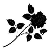 Flower rose black silhouette — Stock Photo