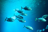 School of fishes — Stock Photo