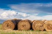 Hay bales landscape — Stock Photo