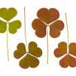 Clover leaves collection — Stock Photo #48236651