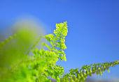 Blue sky and green leaf — Stock Photo