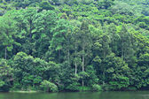 Lake with green tree — Stock Photo