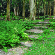 Path in woodland — Stock Photo