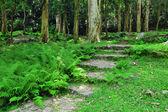 Cesta v lesích — Stock fotografie