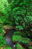 Tropisk skog — Stockfoto